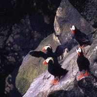 38島目             アメリカ合衆国・アラスカ州       セントポール島