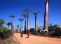 26島目                 マダガスカル共和国 マダガスカル島