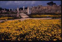 43島目             キプロス共和国 ・キプロス島