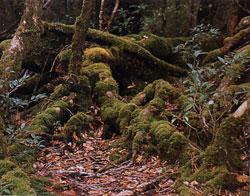 日本の島再発見_鹿児島県_木の幹に宿る苔