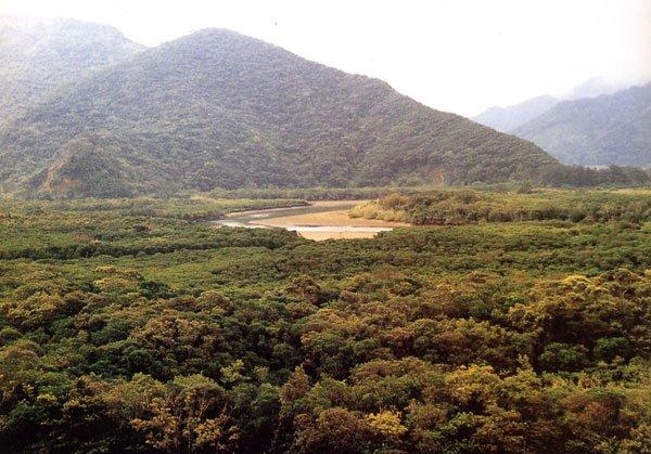 日本の島再発見_鹿児島県_奄美群島_奄美大島_マングローブの原生林