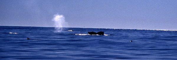 コディアック島