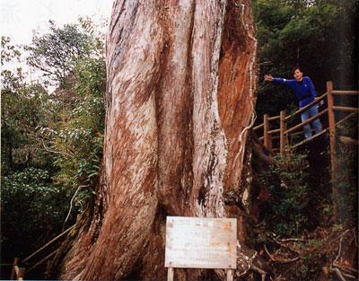 日本の島再発見_鹿児島県_屋久島_弥生杉(世界遺産)と小鉄