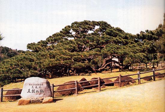 日本の島再発見_沖縄県_久米島_五枝の松