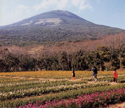 日本の島再発見_東京都_伊豆諸島_八丈島_八丈冨士とフリージア畑