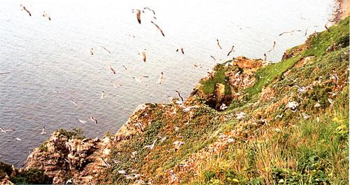 日本の島再発見_北海道_天売島_数十万羽が住みついている「赤岩」