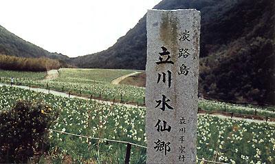 日本の島再発見_兵庫県_淡路島_立川水仙郷