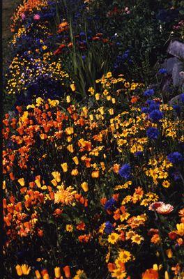 アラスカの花 スライドショー
