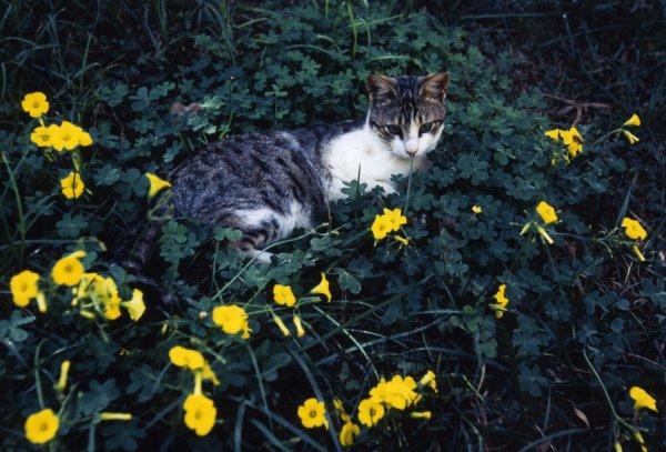キプロスの猫