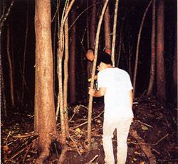 日本の島再発見_東京都_小笠原諸島_母島_グリーンペペを探して林の中へ