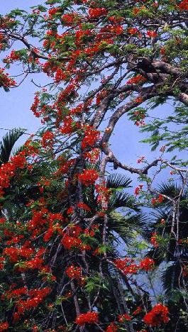 ニュー・プロビデンス島の花