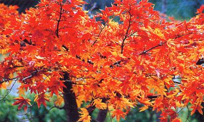 日本の島再発見_香川県_小豆島_小豆島の紅葉