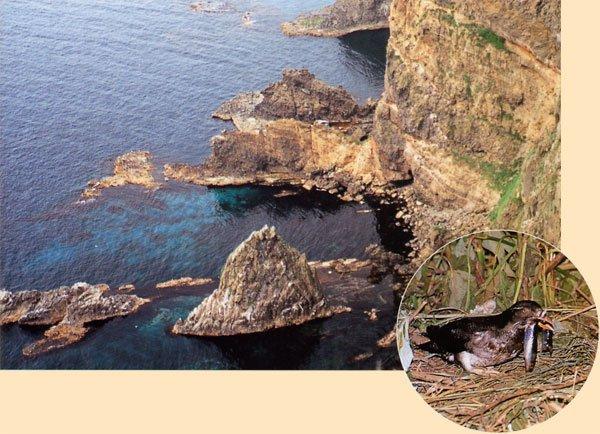日本の島再発見_北海道_天売島_海鳥の聖域 天売島、ウトウ