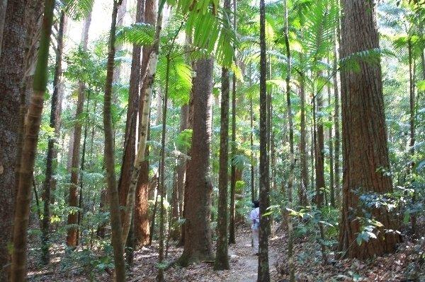 亜熱帯雨林