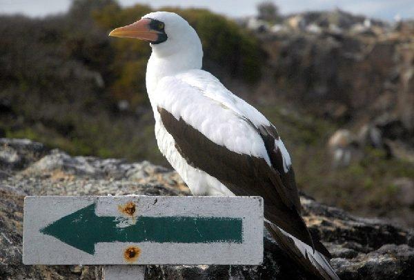 ガラパゴスの鳥図鑑