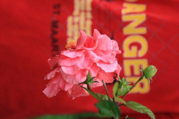 ベトナム フーコック島 花