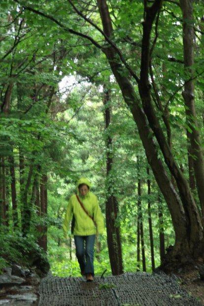 地球の島めぐり_韓国_鬱陵島_ボンレの滝への山道