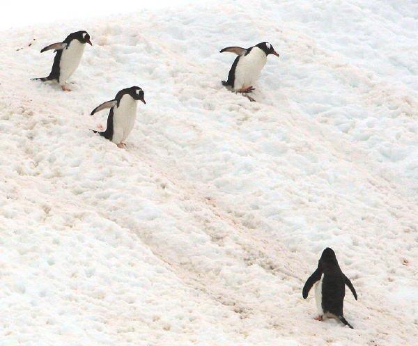 南極写真1