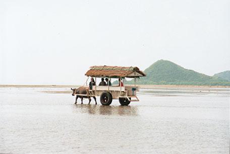 日本の島再発見_由布島の水牛車
