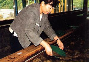 日本の島再発見_新潟県_佐渡島_小鉄の砂金取り