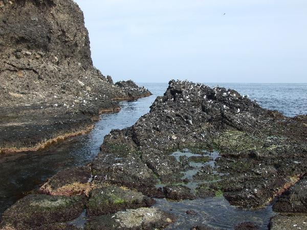 地球の島めぐり_韓国_鬱陵島_岩の上には海鳥がいっぱい