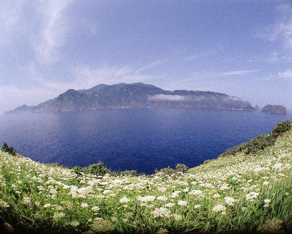 地球の島めぐり_韓国_鬱陵島_フタクサが満開