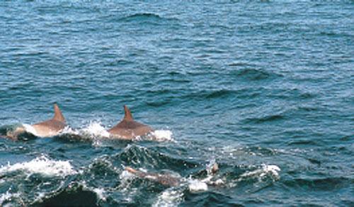 日本の島再発見_天草イルカウォッチング