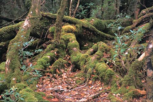 日本の島再発見_屋久島 樹木の共生