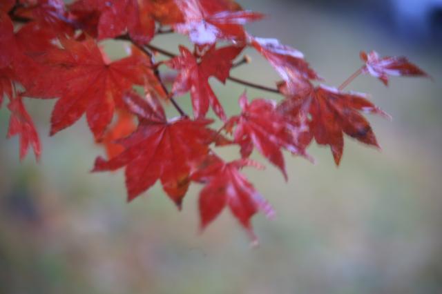 秋の風景2013 北海道・大阪・奈良・京都・兵庫・九州