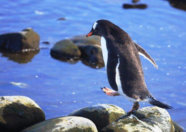 南極写真8