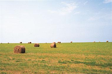 日本の島再発見_焼尻島_めん羊牧場
