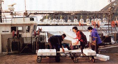 日本の島再発見_島根県_隠岐島_イカつり船