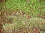 クィーンシャーロット島_SS太古の森に朽ち果てたカヌー1