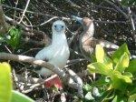 ガラパゴス諸島=Ⅱ_1ガラパゴスの鳥図鑑