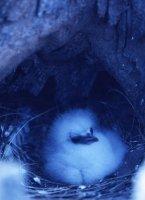 セイシェル共和国 マヘ島 鳥