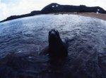 ガラパゴス諸島=Ⅱ