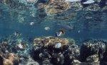 パラオ共和国_2ビーチ